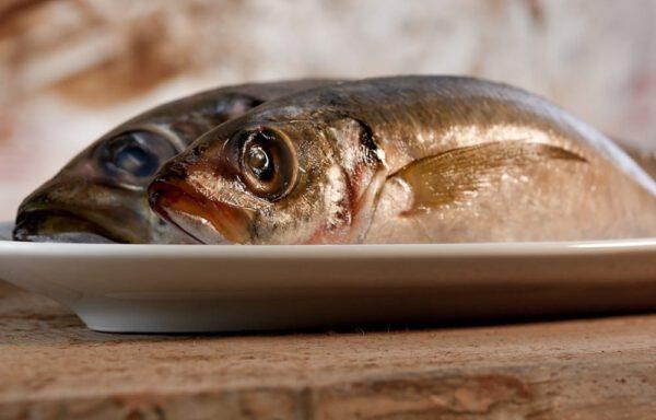 BarfGold Makrelen 1000g